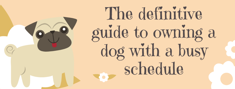 owning a dog with a busy schedule