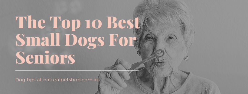 Best Small Dogs For Seniors