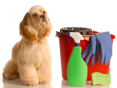 How To Groom A Dog Professionally with dog cleaning equipment