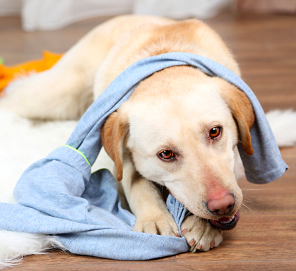 how to make your dog happy and not depressed  by keeping things tidy