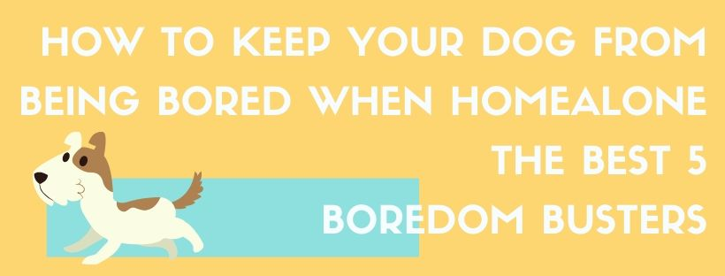How To Keep Dog From Being Bored When Home Alone With The Best 5 Dog Boredom Busters