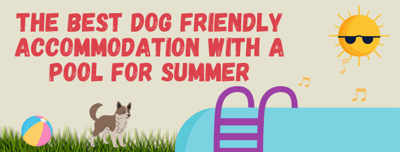 The Best Dog Friendly Accommodation With A Pool For Summer