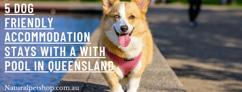 dog friendly accommodation with pool qld