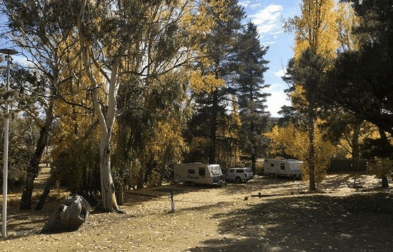 Cooma Tourist Park   Pet friendly accommodation ACT & Snowy Mountains